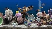 SereneScreen Marine Aquarium 3 - YouTube