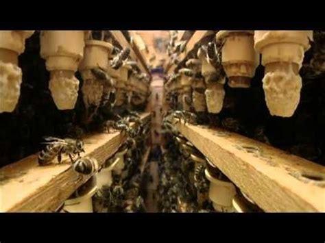 ameisen im bienenhaus pin ma ke auf bienen bienen bienen halten und bienenhaus