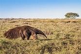 Animals That Live in the Grasslands - WorldAtlas