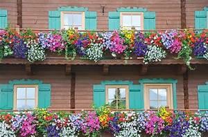 Blumenkästen Bepflanzen Sonnig : ch u hoa treo ban c ng xinh x n ~ Orissabook.com Haus und Dekorationen