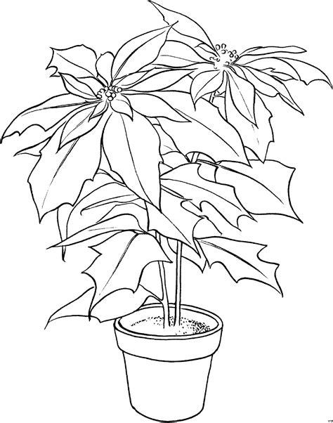 grosse zimmerpflanze ausmalbild malvorlage blumen