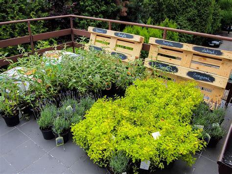 terraceroof garden plants   grow