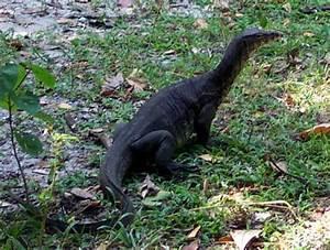 Dino Like Reptiles Genesis Park