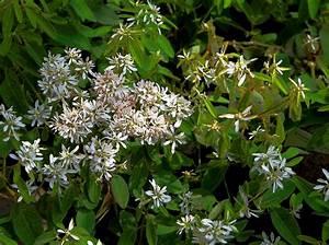 Kübelpflanzen Winterhart Schattig : euphorbia diamond frost zauberschnee pflanzen versand ~ Michelbontemps.com Haus und Dekorationen