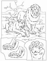 Coloring Lions Lion Colouring Disegni Colorat Animals Coloriage Felini Leoni Lei Animale Tigri Animal Tigers Books Printable Disegno Adult Planse sketch template