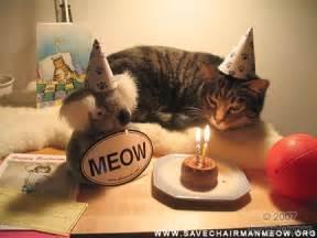 happy birthday cat happy birthday to me the lioness
