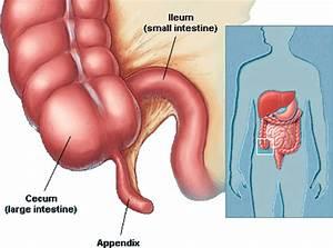 How many vestigial organs are present in human body, and ...  Vestigial