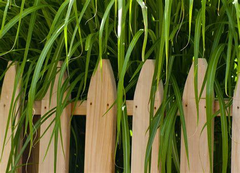 recinzioni di legno per giardini recinzioni in legno per giardini
