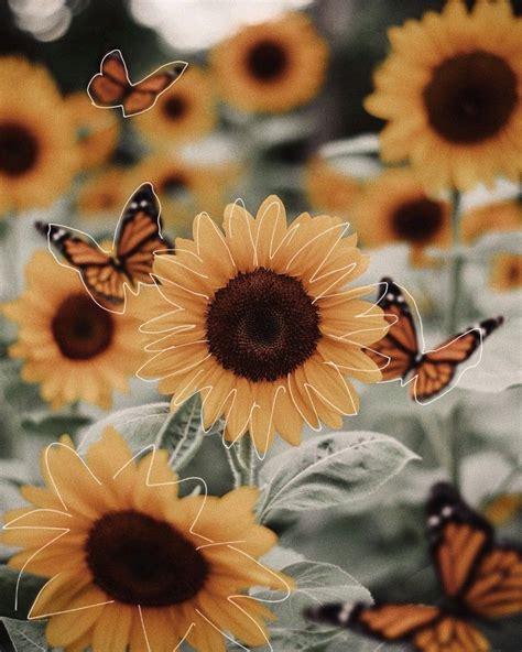 sunflower yellow aesthetic pastel yellow aesthetic