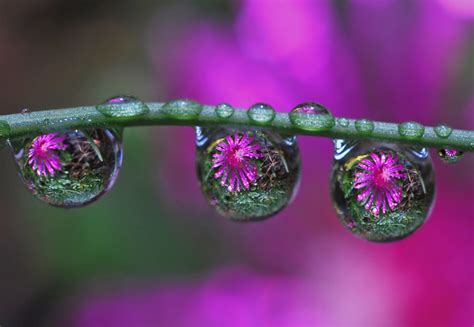 drops in drops | Flickr - Photo Sharing!