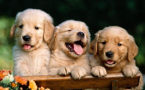 Cute Dogs Wallpapers Hd Group (96