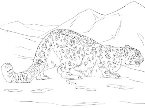 snow leopard hunting coloring page  printable coloring pages