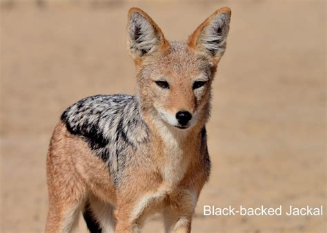 South Africa Animals NatureFocus Nature Photography by