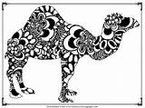 Camel Coloring Pages Adult Printable Print Camels Animals Realistic Getcolorings sketch template