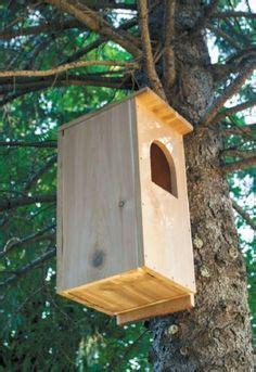 owl box plans building  barred owl nest box gardening
