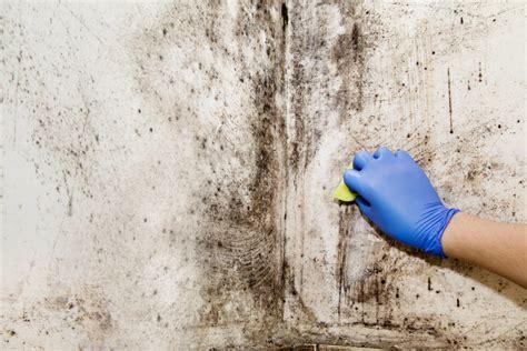 probleme moisissure chambre moisissure sur mur causes et comment enlever éviter