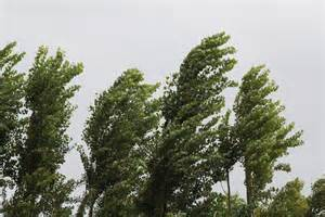 Wind Blowing Trees