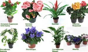 Цветы домашние цветущие комнатные каталог фото с названием