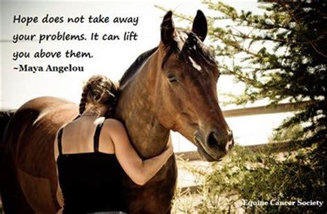 horses hope quotes quotesgram