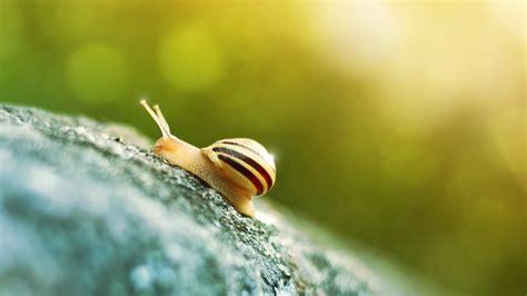 beige  black snail  image peakpx