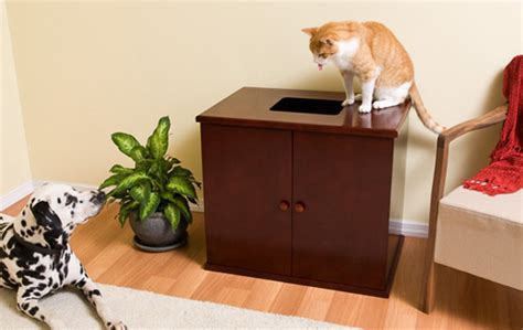 Best Dog Proof Cat Litter Box For Those With Cats And Dogs