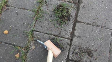 Unkraut Aus Pflaster Entfernen 832 by Unkraut Bequem Und Rein Mechanisch Entfernen Frag Mutti
