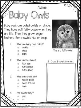fall owl activities owls reading comprehension worksheets