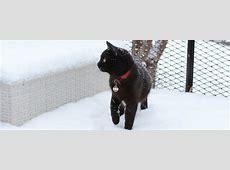 Katzen und das Mysterium Schnee Katzende