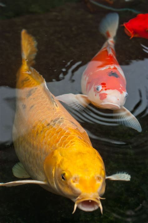 Things You Need To Know Before Keeping A Pet Rope Fish