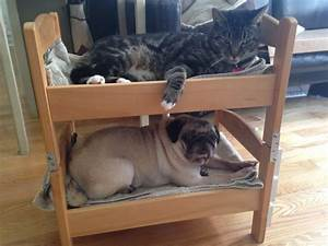 Can a dog and a cat be bunk bed mates seems so ikea for Cat and dog furniture