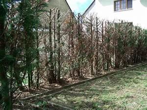 Darf Nachbar Meine Hecke Schneiden : betreten des nachbargrundst ckes zwecks heckenschnitts ~ Lizthompson.info Haus und Dekorationen