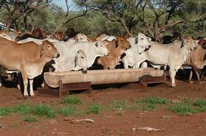 The Western Australian beef industry   Agriculture and Food