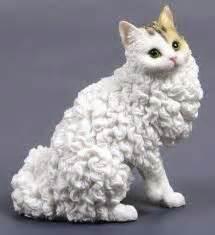 Those ears!!! | No Coat Kitty | Creepers | Pinterest ...