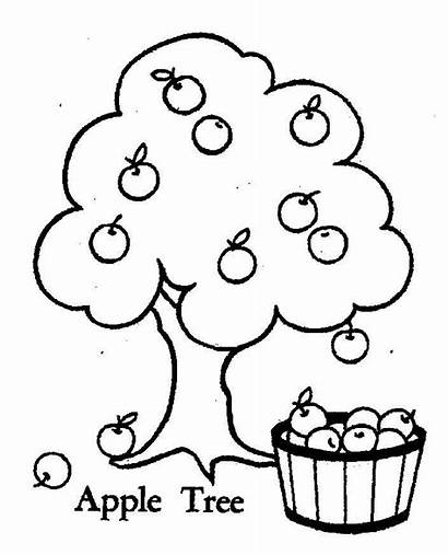 Apple Coloring Tree Pages Fruit Printable Drawing