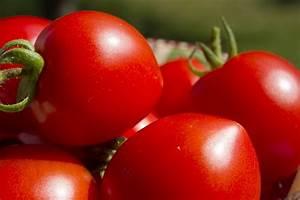 Tomaten Düngen Hausmittel : welche erde f r tomaten mein balkongarten tipp balkon ~ Whattoseeinmadrid.com Haus und Dekorationen