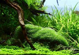 Aquarium L Form : riccia fluitans aquascape pinterest aquariums ~ Sanjose-hotels-ca.com Haus und Dekorationen