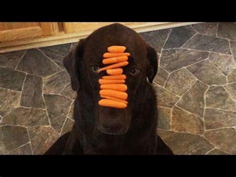 yannick net pourquoi les chiens sont meilleurs que les