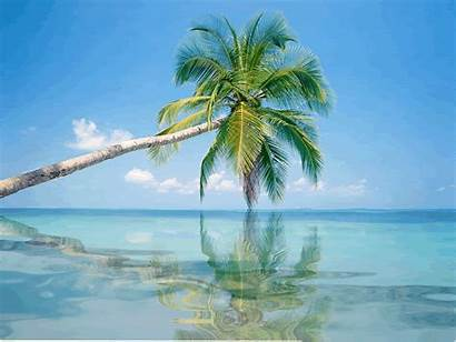 Animated Vacation Palm Tree Nature Summer Reflection