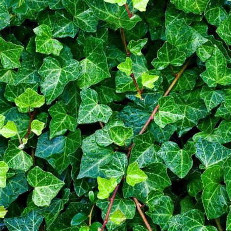 plante verte interieur sans lumiere plantes d int 233 rieur sans lumi 232 re liste ooreka