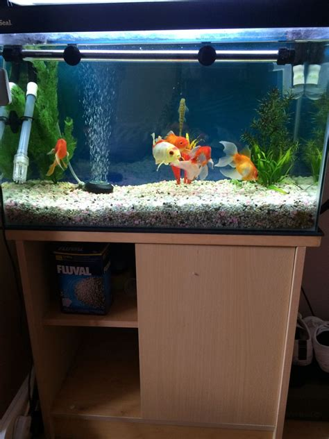 fish aquarium for sale fish tank for sale south east pets4homes