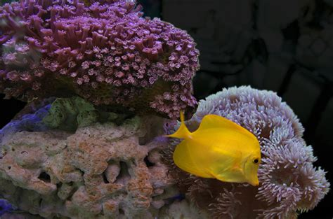 coral reef safe fish species  saltwater tanks