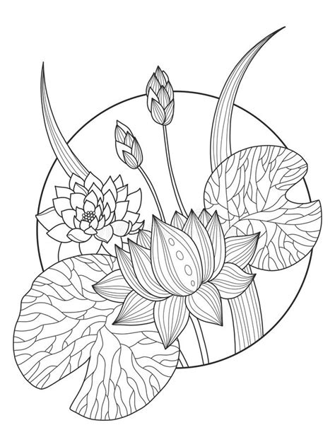 Lotus Flower Coloring Book Vector Illustration Stock Vector - Illustration of coloring, design