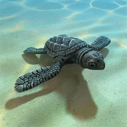 Turtle Sea Turle Pet Names Funny Ett