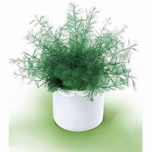 Plante Repulsif Mouche : plante de neptune provence outillage ~ Melissatoandfro.com Idées de Décoration