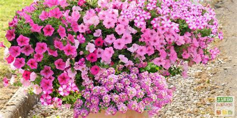 5 Compositions Pour Une Jardinière Fleurie L'été Prochain