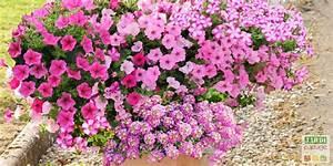Jardiniere Fleurie Plein Soleil : 5 compositions pour une jardini re fleurie l 39 t prochain ~ Melissatoandfro.com Idées de Décoration