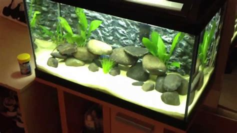 tropical fish tank 60 litre cycle 2nd update