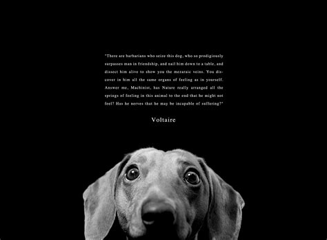 famous quotes  animal cruelty quotesgram