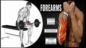 Massive Forearms Program