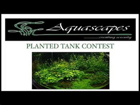 Aquascapes Hawaii by Planted Tank Contest From Aquascapes Hawaii